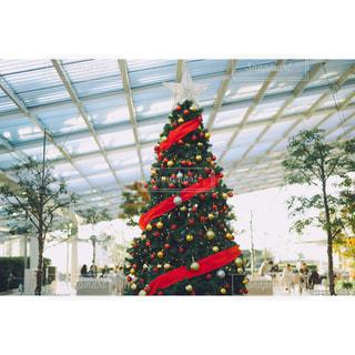 思い出のクリスマスツリーの写真・画像素材[939472]