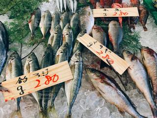 魚の山の写真・画像素材[1049848]