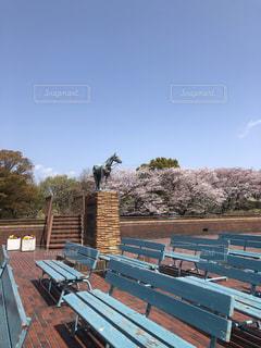 桜 公園 森林公園 横浜山手 小春日和