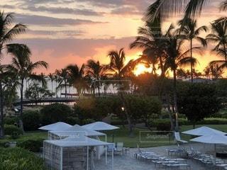 海,屋外,景色,旅行,ヤシの木,リゾート,ハワイ島,パーム
