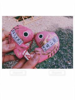 ピンク,ハート,可愛い,恋,鯛