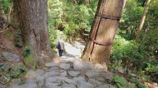 自然,風景,屋外,青空,水面,滝,樹木,和歌山,草木,那智の滝,那智勝浦
