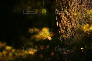 光を捕まえた蜘蛛の巣の写真・画像素材[929182]