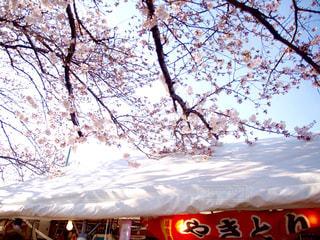 桜の写真・画像素材[413847]