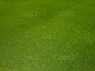 緑の写真・画像素材[453155]