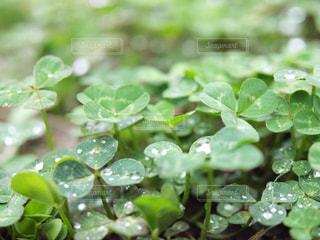 雨の写真・画像素材[453163]