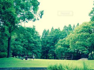 公園 - No.453225