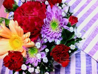 花の写真・画像素材[470601]