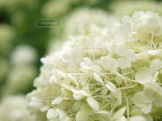 花の写真・画像素材[535607]