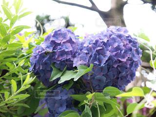 花の写真・画像素材[535621]