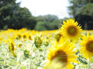 花の写真・画像素材[595430]