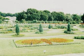 花畑の写真・画像素材[701892]