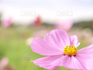 近くの花のアップ - No.843358