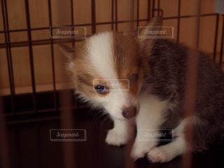子犬 - No.1184102