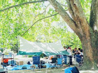 大きな木の下での写真・画像素材[1203872]