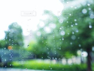雨,緑,ガラス,水玉,窓ガラス,露,梅雨,雨粒