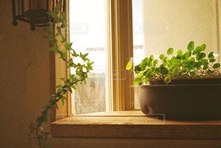 窓辺のグリーンの写真・画像素材[1232926]