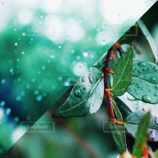 梅雨の写真・画像素材[1250925]