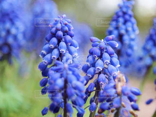近くの花のアップの写真・画像素材[1378077]