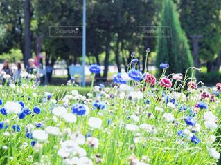 公園の写真・画像素材[1378092]