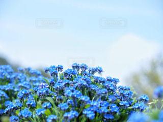 畑と空の写真・画像素材[1378098]