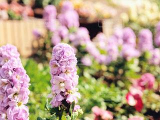 花の写真・画像素材[1378102]