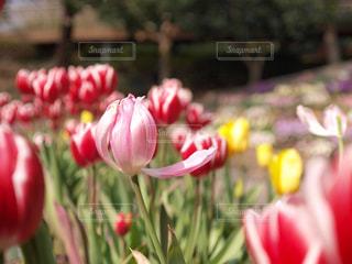植物にピンクの花の写真・画像素材[1378105]