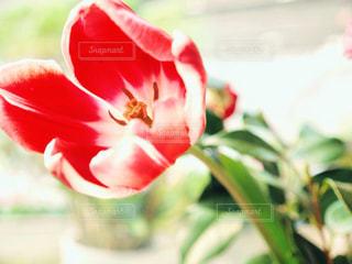 近くの花のアップの写真・画像素材[1378106]
