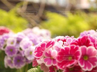 花の写真・画像素材[1378107]