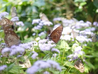 花の写真・画像素材[1378110]