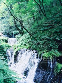 森の中の大きな滝の写真・画像素材[1448556]