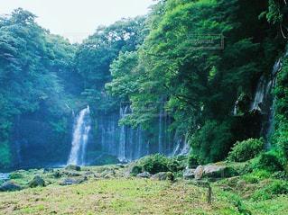森の中の大きな滝の写真・画像素材[1448559]