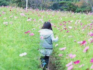 子ども,花,秋,緑,植物,コスモス,flower,秋桜,コスモス畑