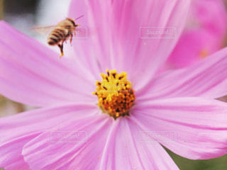 植物にピンクの花の写真・画像素材[1457723]