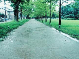 公園,森,緑,植物,小道,道,未来,進路