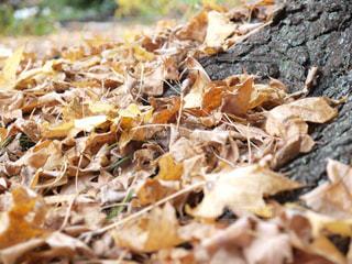公園,秋,紅葉,大阪,植物,落ち葉,植物園