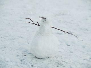 冬,雪,白,枝,雪だるま,寒い