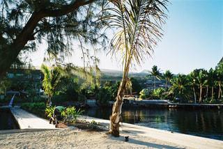 空,海外,ビーチ,島,水面,観光,樹木,ヤシの木,ヤシ,南の島,海外旅行,タヒチ,草木,パーム