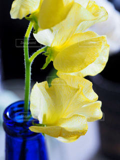 花,植物,青,花瓶,黄色,瓶,flower,イエロー