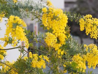 黄色の花の写真・画像素材[1848220]