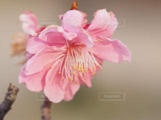 植物にピンクの花の写真・画像素材[1848226]