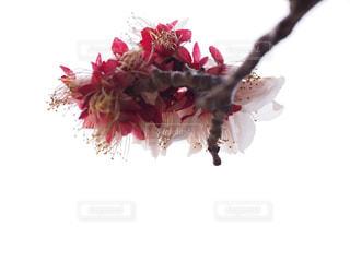近くの花のアップの写真・画像素材[1849168]