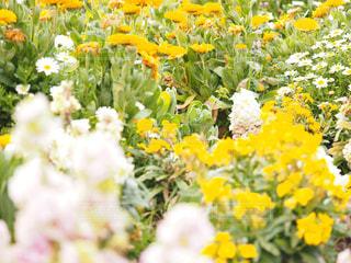 自然,花,春,緑,植物,黄色,明るい