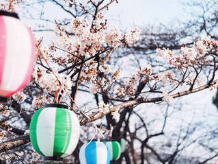 桜の写真・画像素材[1871390]