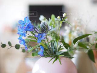 青い花の写真・画像素材[1885651]