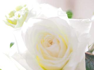 花の写真・画像素材[2143460]