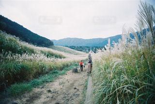 自然,風景,空,山,登山,ススキ,高原,フィルム,ハイキング,フィルム写真,フィルムフォト