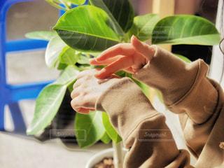 冬,手,クリーム,観葉植物,美容,乾燥,コスメ,ハンドクリーム,化粧品,パーカー,肌,乾燥肌