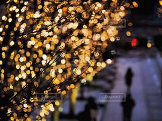 冬,大阪,夕暮れ,街,ぼかし,樹木,イルミネーション,都会,梅田,明るい,通り