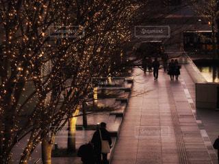 夜,樹木,イルミネーション,人,通り,グランフロント大阪